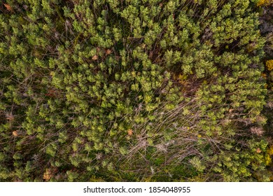 Aerial view of the forest dieback caused by drought and storms in the German mixed forest