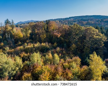 Aerial view of forest in fall, colorful trees