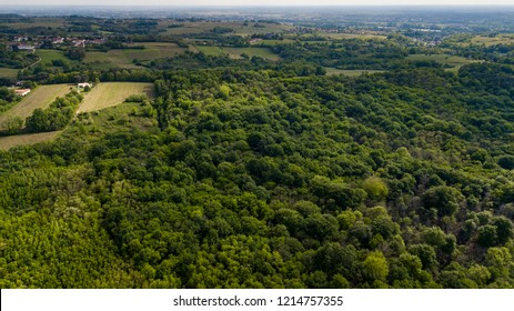 Aerial view of the forest in Gironde, Aquitaine, France