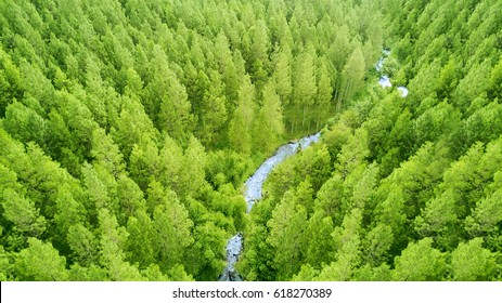 Aerial view of forest of green pine trees on mountainside with a little river