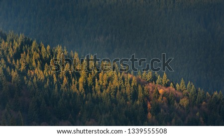 aerial-view-forest-late-autumn-450w-1339