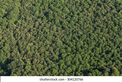 aerial view of the forest in Poland