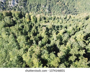 Aerial view of forest in pyrenean countryside, Aude region of France