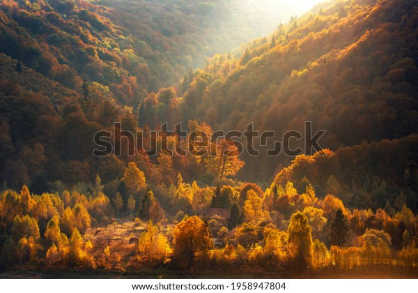 aerial-view-forest-sunset-late-600w-1958