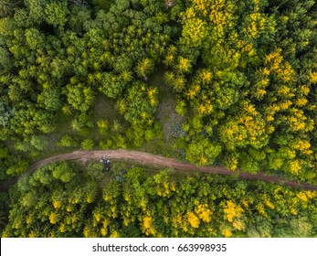 Aerial view of the forest trees and road from the top view