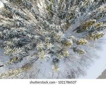 Aerial view: forest in winter