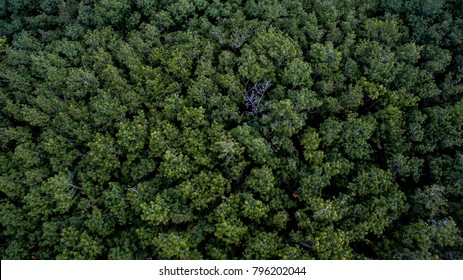 Aerial view of forest.beautiful green
