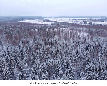 Aerial view of frosty winter forest in Finland. Drone shot.