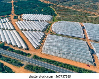 Aerial View Fruit and Orange Trees Plantation, Spain