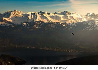 Aerial View Golden Eagle flying high hunting above stunning landscape, gliding back to nest over amazing panorama view on Swiss Alps, Lake Lucerne at Sunset in Summer from Mount Rigi, Switzerland