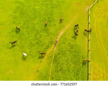Aerial view of grazing horses on a meadow. Beautiful countryside scenery with horses from above. Background or texture concept.