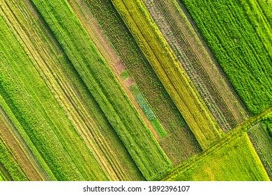 Aerial view of green agricultural fields in spring with fresh vegetation after seeding season on a warm sunny day.