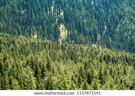 Aerial View Green Alpine Trees Thick Stock Photo Edit Now