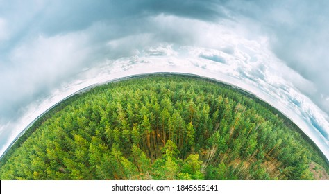 Aerial View Green Coniferous Forest Pines Woods Landscape In Spring Day. Top View Of Beautiful European Nature From High Attitude. Drone View. Bird's Eye View. Little Small Planet Concept.