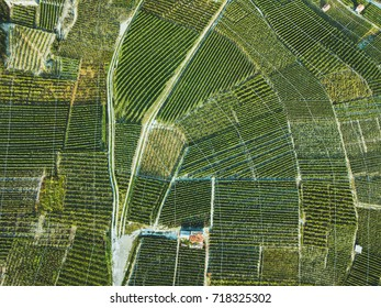 aerial view of green fields landscape from drone, beautiful wineyards, wine grape agriculture