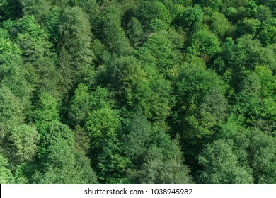 Aerial view green forest background, Caucasus, Russia