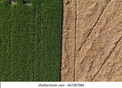 aerial view of green harvest field in Poland