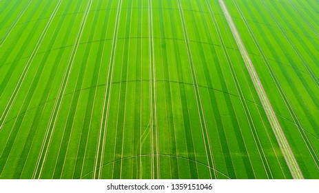 Aerial view of a green irrigated field