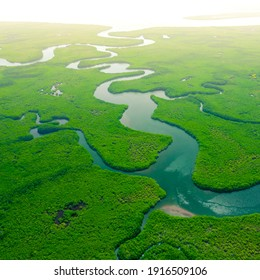 Aerial View of Green Mangrove Forest. Nature Landscape. Amazon River. Amazon Rainforest. South America.