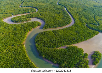 Aerial view green mangrove tropical forest swamp line to sea Thailand