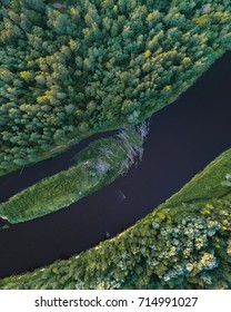 Aerial view of green pine forest and a river with beaver dam , captured in sunset.