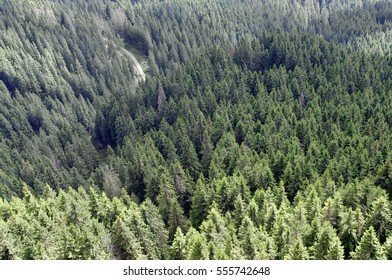 aerial view of green pine tree forest
