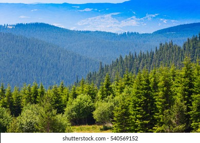 Aerial view of green pine trees in high mountains landscape in Rila, Bulgaria
