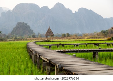 Aerial view of green rice fields and mountains, paddy field at Vang Vieng , Laos.