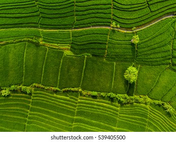 Aerial view of the green rice fields. Bali, Indonesia