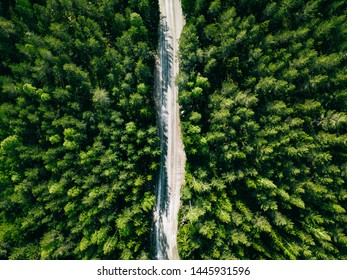 Aerial view of green summer forest road. Drone photo from above.