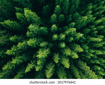 Aerial view of green summer forest with spruce and pine trees in Finland.