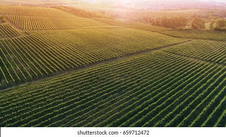 Aerial view  of a green summer vineyard at sunset