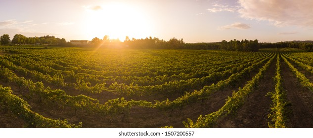 Aerial view of a green vineyard in Portugal at sunset.