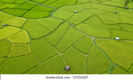 Aerial view of the green and yellow rice field, grew in different pattern, soon to be harvested, Nan, Thialand
