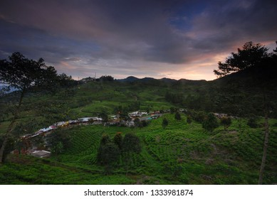 Aerial View of Gunung Mas Tea Plantation, Puncak Pass, Bogor, West Java, Indonesia