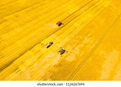 Aerial view of harvest. Combine harvesters and tractor harvesting golden wheat field. Agriculture from scenic drone view. Czech republic, European union.