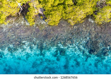 "Aerial view of a healthy coral reef growing on the edge of an island in Raja Ampat, Indonesia. This biodiverse region is known as the ""heart of the Coral Triangle"" due to its amazing marine life"