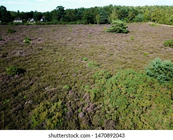 Aerial view of heather in heartland
