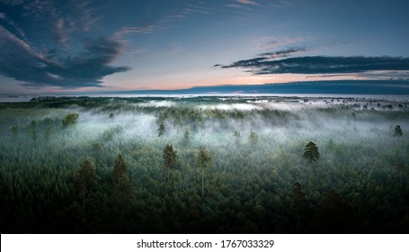 Aerial view of highway leading through a forest covered in fog.  Light rays going through the tree tops.