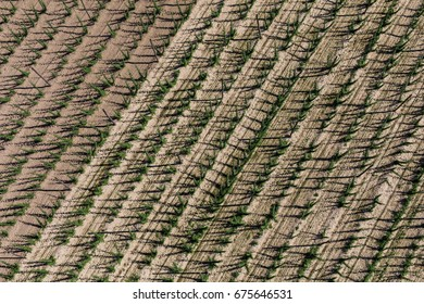 aerial view of the hop harvest fields in Poland