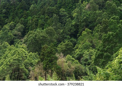 Aerial view of huge green healthy pine forest, panorama texture