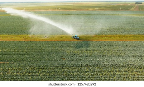 Aerial view: Irrigation equipment watering cabbage field. Irrigation system watering farm field.