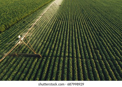Aerial view of irrigation equipment watering green soybean crops field in summer afternoon, drone point of view for unusual angle for agricultural activity