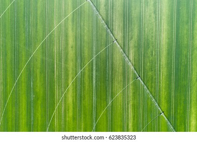 Aerial view of irrigation pivot system on wheat field in springtime shoot from drone