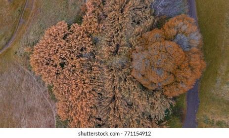 Aerial view of an isolated tree during the autumn season.