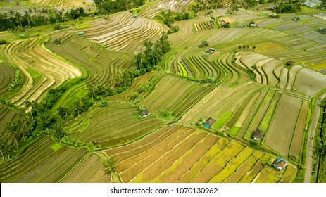 Aerial view of the Jatiluwih terraces ricefield in Bali, Unesco world heritage, Indonesia