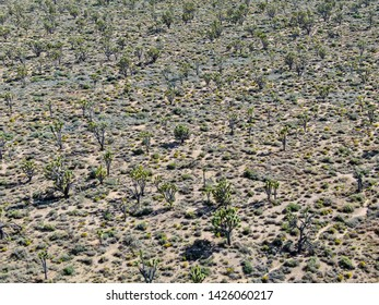 Aerial view of Joshua Tree National Park. American desert, national park in southeastern California. Yucca brevifolia (Joshua Tree) is a plant species belonging to the genus Yucca.