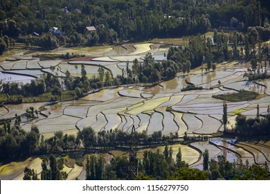 Aerial view of Kashmir valley with rice field terraces