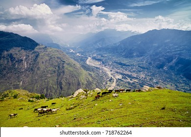 Aerial view of the Kullu valley with horses in the foreground. Naggar, Himachal Pradesh. North India.