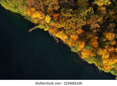 Aerial view of the lake and the bright yellow forest. Autumn landscape
